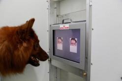 I cani distinguono i nostri stati d'animo dalle espressioni del viso