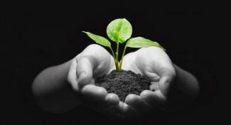 OVH conferma il suo impegno verso le startup