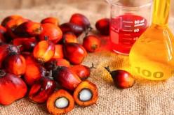 Attenzione all'olio di palma, causa il diabete