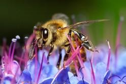 In Norvegia nasce l'autostrada per gli insetti