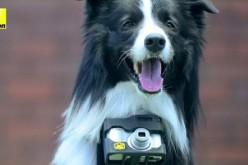 Nikon inventa la fotocamera per cani, che immortala le loro emozioni