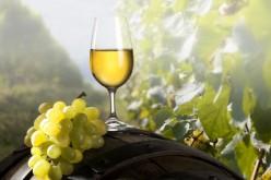Anche il vino bianco fa bene, protegge cuore e reni