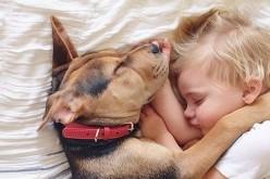 Pet Therapy al Fatebenefratelli per i piccoli ricoverati