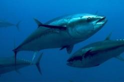 Allarme Wwf, pesci dimezzati negli ultimi 40 anni