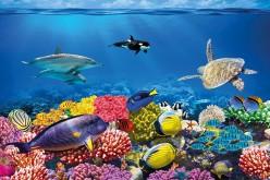 Ambiente, la barriera corallina è danneggiata dalle creme solari