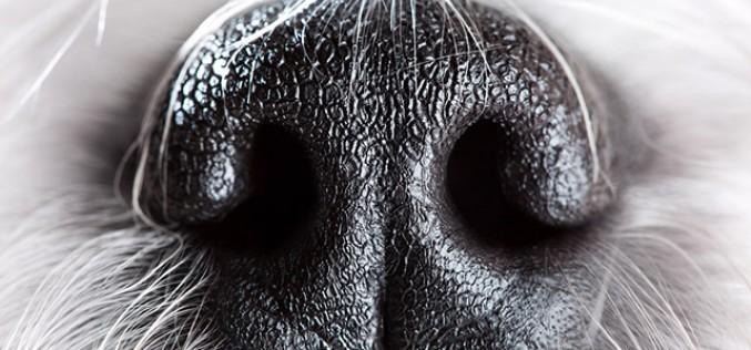 Cani e tumori, Liù è in grado di individuarli prima dei medici