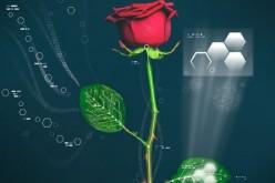 Dalla Svezia la prima pianta cyborg