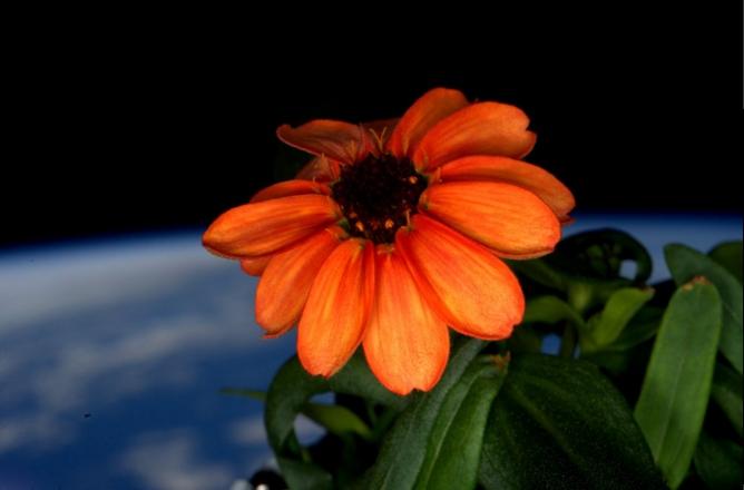 fiore spazio iss