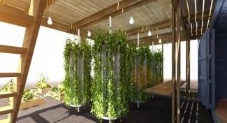 Impact Farm, arriva la serra domestica personalizzata