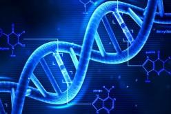 Gli scienziati hanno salvato quattro immagini dentro il DNA