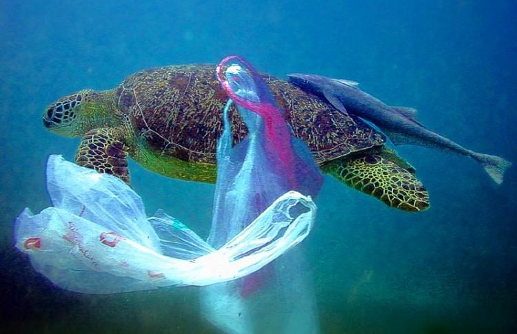 """Week-end di pulizia delle spiagge, al via """"Clean up the Med"""" di Legambiente"""