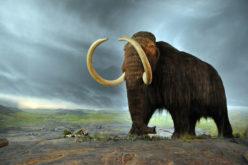 Nasce PaleoFactory, animali estinti a portata di click