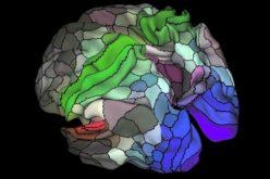 Cervello, la mappa dettagliata rivela 100 nuove regioni