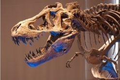 Google porta in vita i dinosauri con i video a 360°