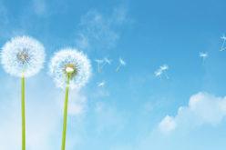 Olivetti Smart Clean Air: la tecnologia 4.0 al servizio dell'ambiente