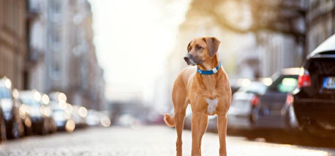 Orange Business Services insieme a Tractive per sapere sempre dove sono gli animali domestici