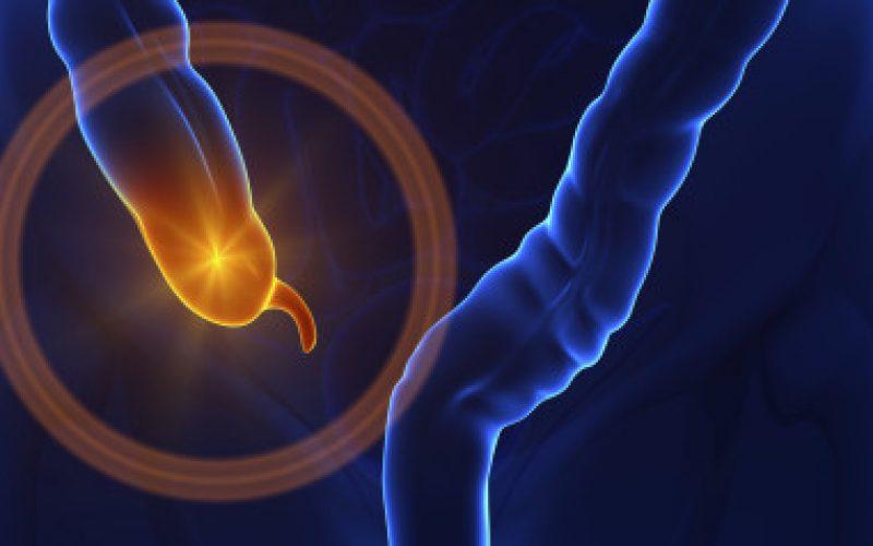 L'appendice non è inutile: è una riserva di batteri