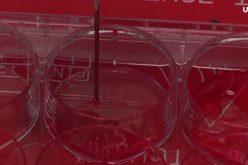 Per la prima volta cellule bioattive stampate in 3D