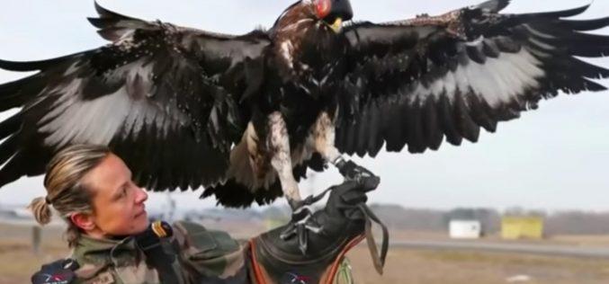La Francia usa le aquile per scovare i droni stranieri