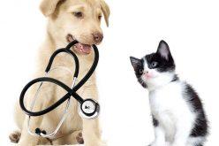 Prima mutua per animali domestici, si risparmierà fino al 50%