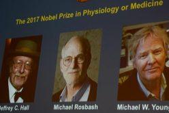 Nobel per la Medicina: tre scienziati svelano i meccanismi del ritmo circadiano