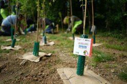 Attività aziendali sostenibili: l'impegno di Epson continua