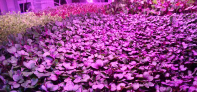 Il primo orto marziano è pronto per essere coltivato