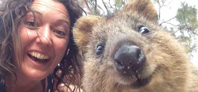 Instagram si impegna per la tutela degli animali selvatici