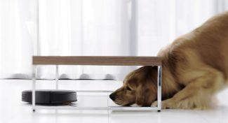 DEEBOT N78D, il robot con aspirazione diretta che si occupa del pelo del tuo animale domestico