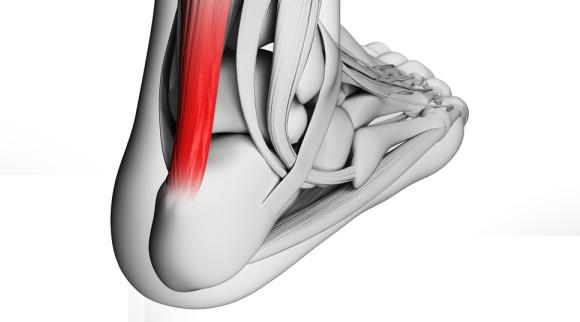 Stampa 3D, ecco i primi legamenti e tendini ottenuti da staminali del grasso
