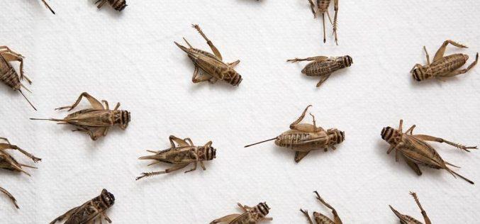 """Insetti killer come armi di massa? Cosa c'è dietro al progetto """"Insect allies"""" della Darpa?"""