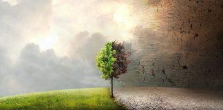 Call for Code Global Challenge 2020: IBM riunisce i developer contro il climate change