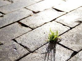 Sostenibilità, la svolta possibile